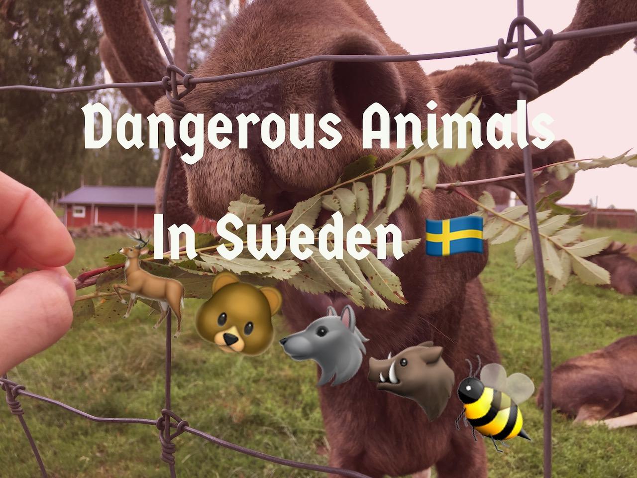 Dangerous animals in Sweden