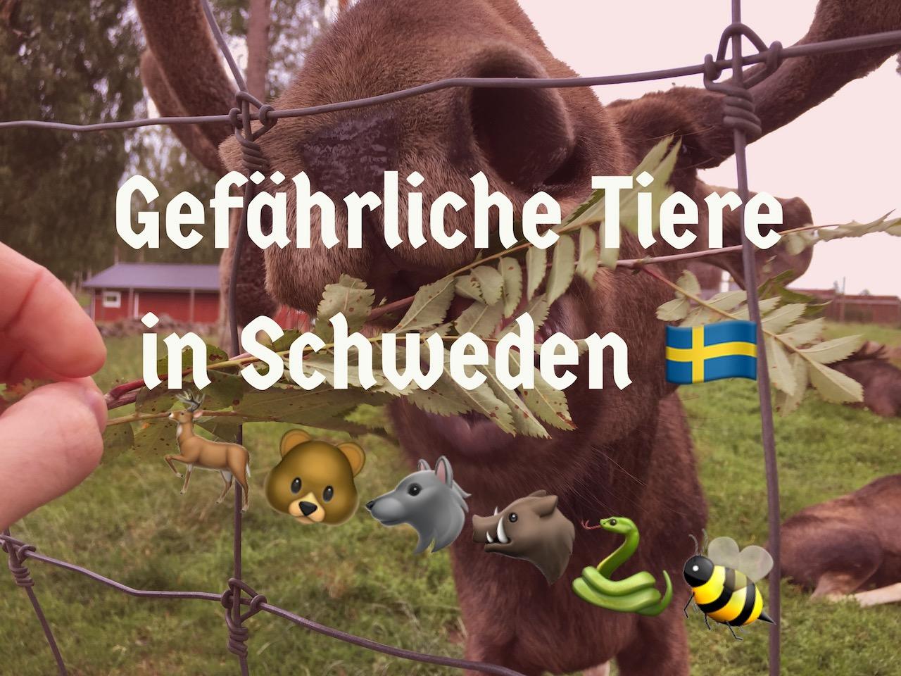 Gefährliche Tiere in Schweden